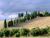 Италия – самая вегетарианская страна Европейского союза