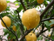 BIO Лимон - 1 шт